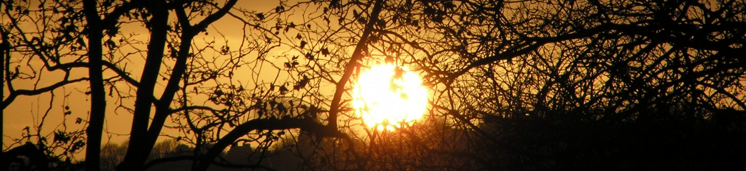 cropped-branch-spiked-sun-2.jpg