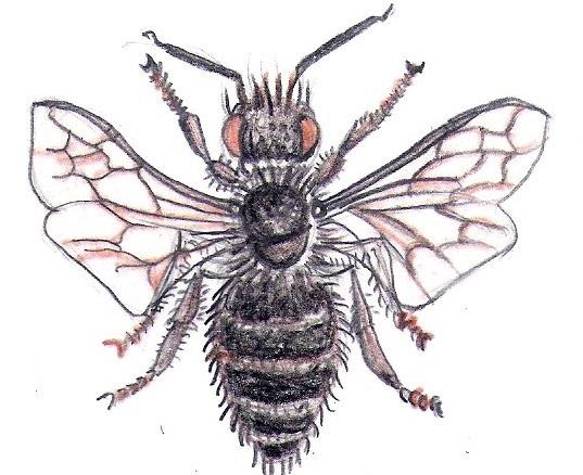 bugs 8 - Copy