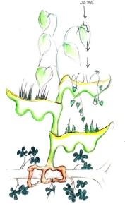 plants 2 - Copy