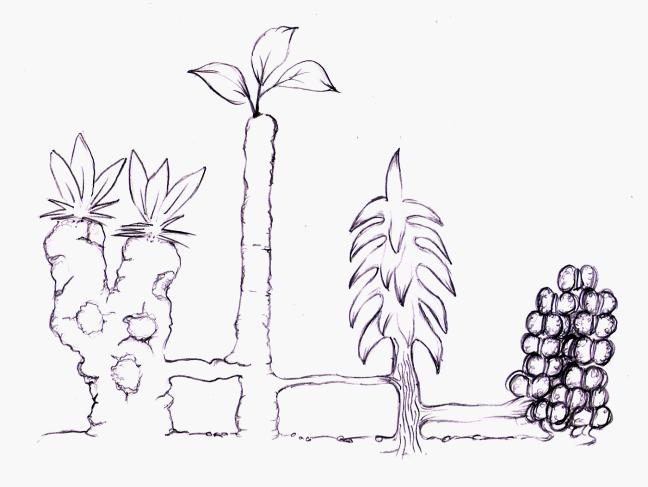siamese plant